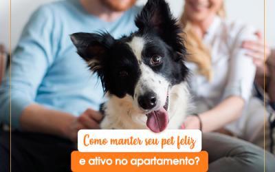 Como manter seu pet feliz e ativo no apartamento?